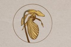 Speciation Artisan Ales - Genetic Drift